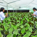 Knowledge, high technology is the key to the success of sustainable agricultural development