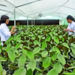 Tri thức, công nghệ cao chính là chìa khóa thành công của phát triển nông nghiệp bền vững