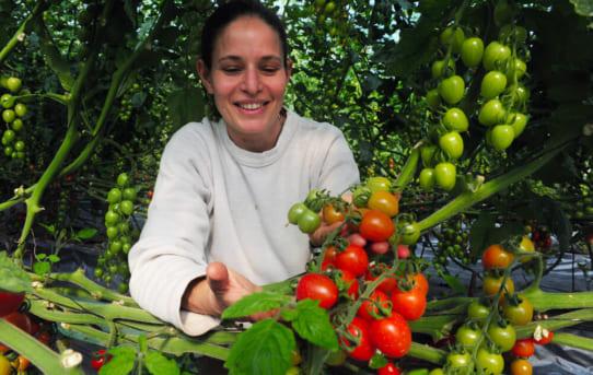 Ngành nông nghiệp Israel, phép màu trên hoang mạc