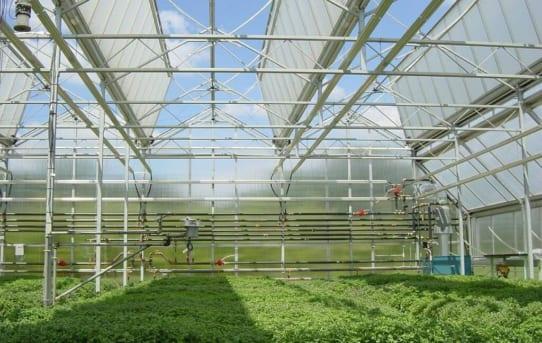 Công nghệ nhà kính Israel hiện đại và tối ưu nhất năng suất cây trồng