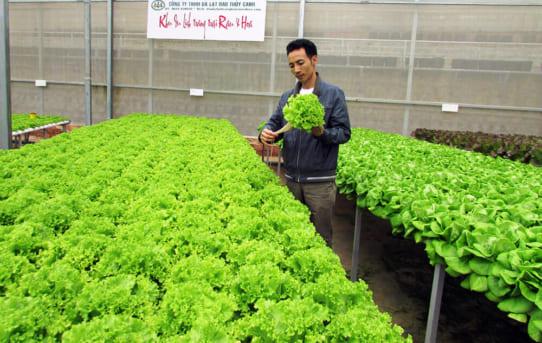 Xu hướng phát triển mới trồng rau công nghệ Israel