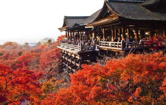 Du học Nhật Bản có những ngành gì? Thông tin ngành học và cơ hội việc làm
