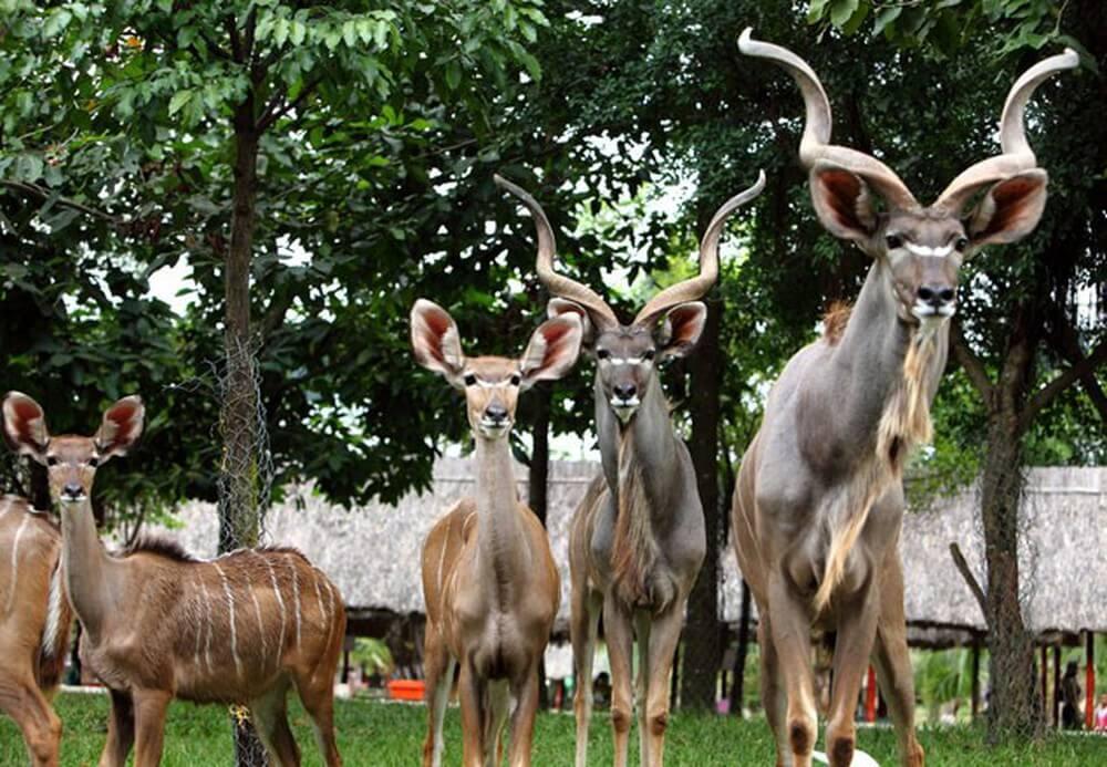 Vườn thú lớn nhất Việt Nam nằm trong khu du lịch Đại Nam