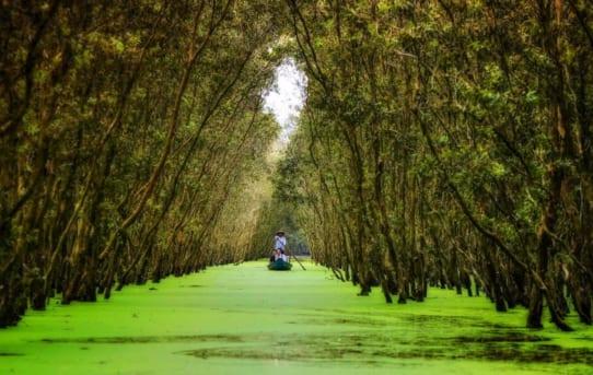Cùng khám phá điều hấp dẫn từ tour rừng tràm Trà Sư
